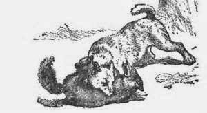 HundFuchs